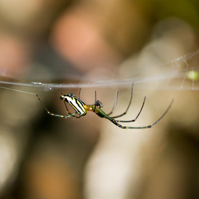 """Hanging Spider"" stock image"