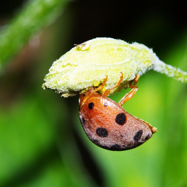 """""""Ladybug Close Up"""" stock image"""