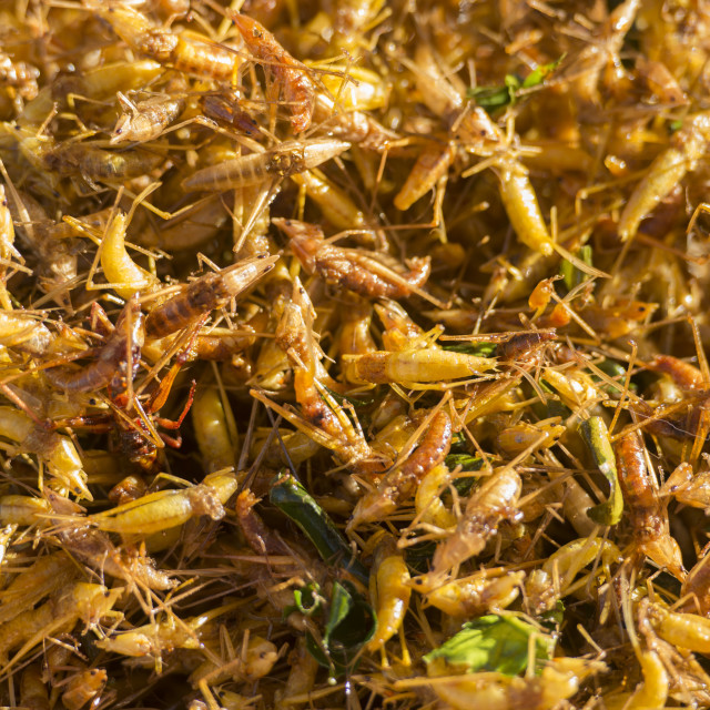 """THAILAND ISAN SURIN MARKET FOOD INSECTS"" stock image"