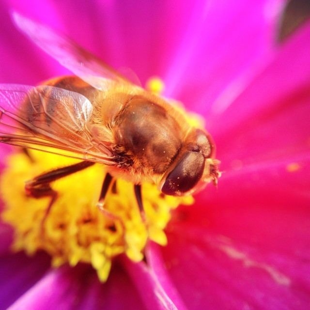 """Bee pollinating a flower"" stock image"