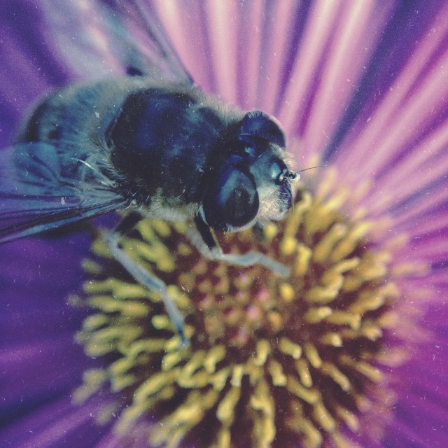 """""""Bee pollinating a flower"""" stock image"""