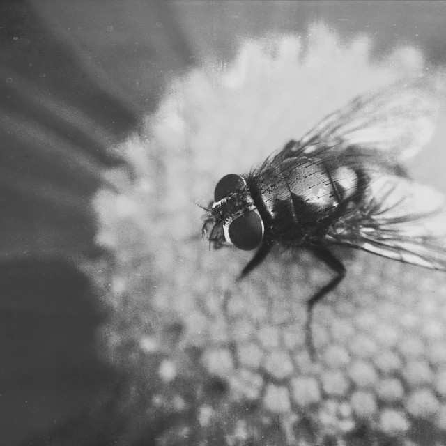 """""""Fly on flower"""" stock image"""