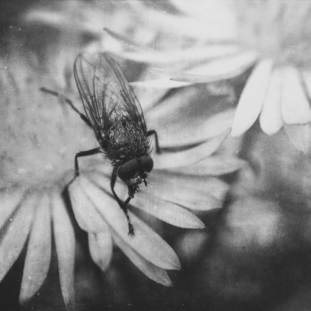 """""""Fly on flowers"""" stock image"""
