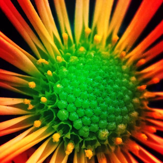 """Creative flower"" stock image"