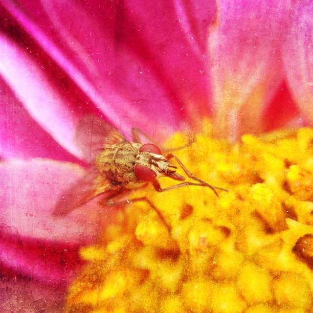 """""""Fly on a flower"""" stock image"""