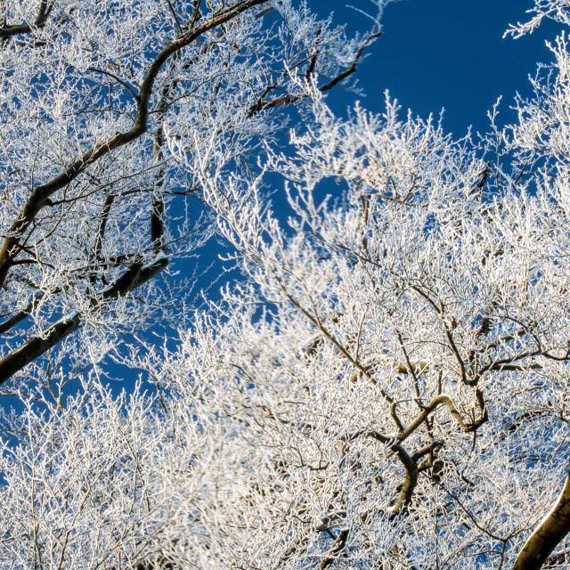 """""""Winter Frosty Sky"""" stock image"""