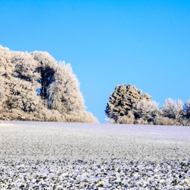 """Winter Woods"" stock image"