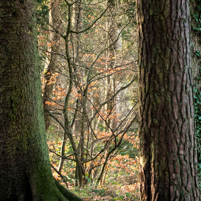 """""""A Woodland scene at Stockgrove Park Bedfordshire"""" stock image"""