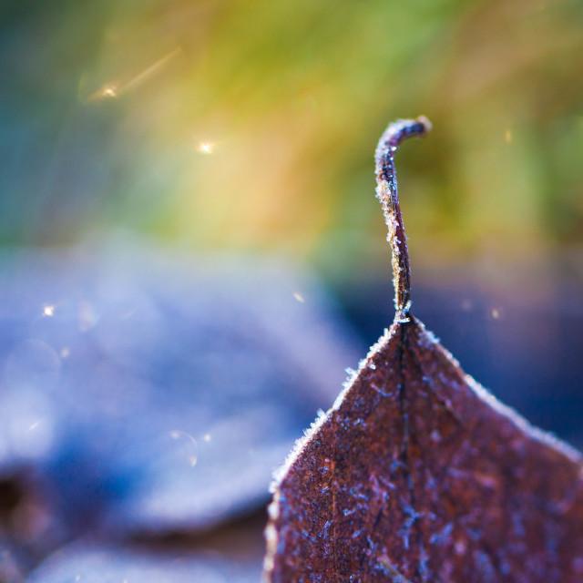 """Frosty Dazzling Leaf"" stock image"
