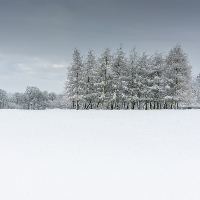 """A Winters Tale"" stock image"