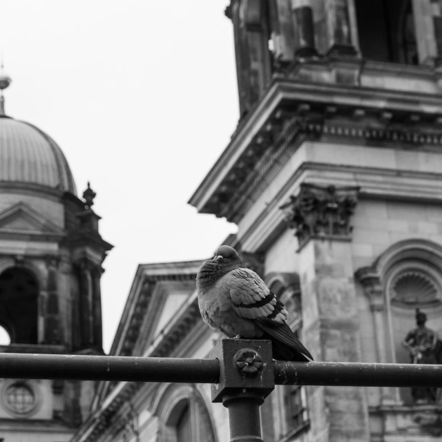 """""""Doves In Front Of The Berliner Dom"""" stock image"""