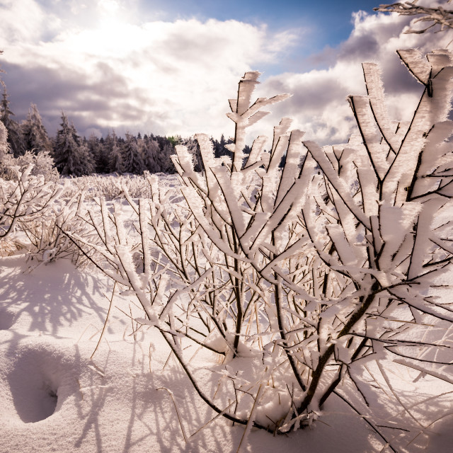 """Tree under snow"" stock image"
