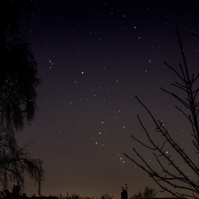"""""""Stars and trees"""" stock image"""