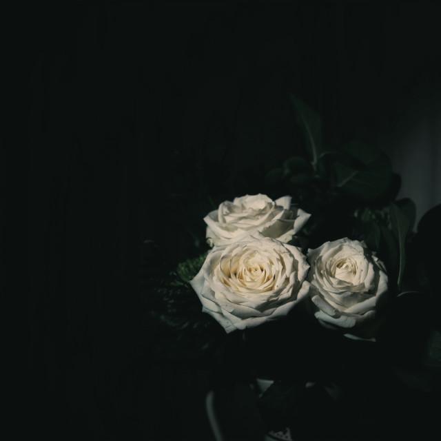 """""""Roses in the dark"""" stock image"""