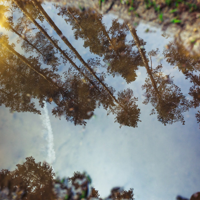 """""""Forest in the spring with trees reflection in a puddle"""" stock image"""