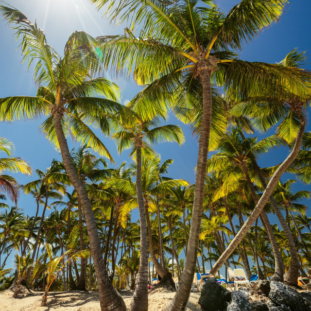 """Palm trees on tropical beach"" stock image"