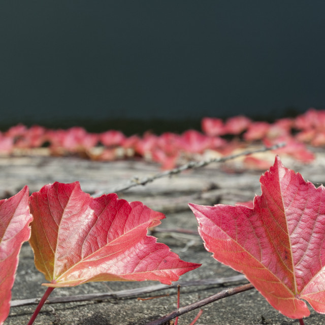 """""""The colour of autumn"""" stock image"""