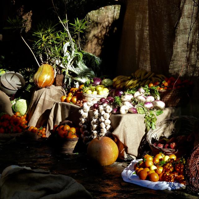 """Autumn's triumph"" stock image"