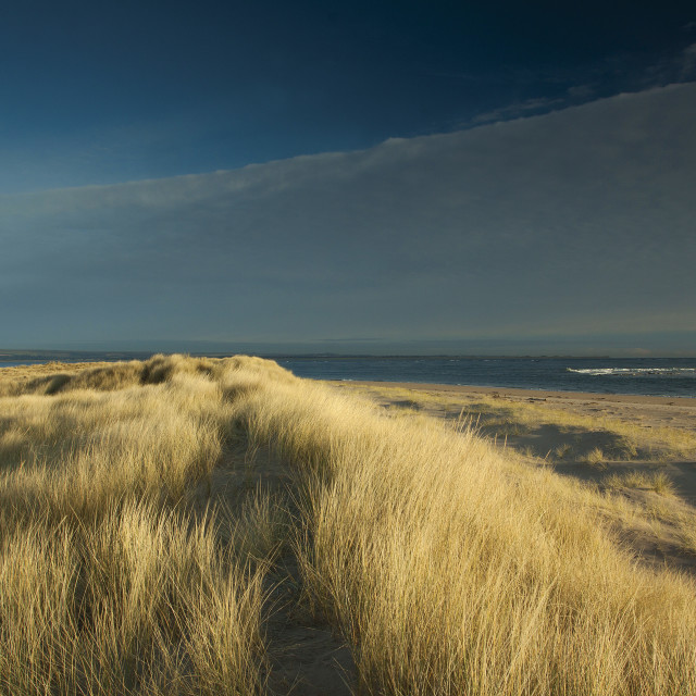 """Abertay Sands"" stock image"