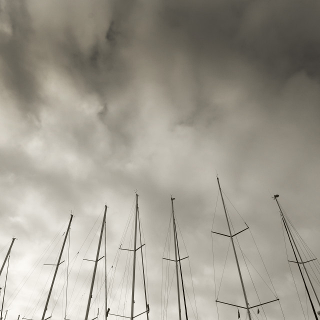 """""""Masts against winter skies"""" stock image"""