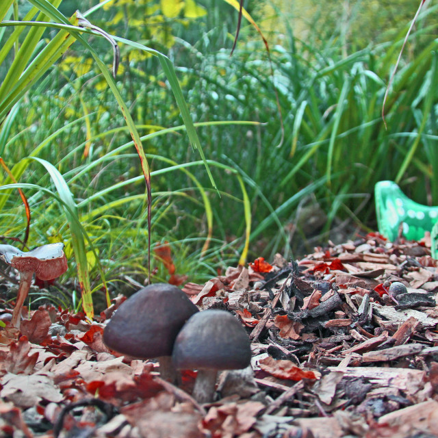 """""""Wellies and Mushrooms"""" stock image"""