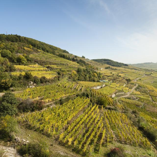 """Kaysersberg vineyards, France."" stock image"