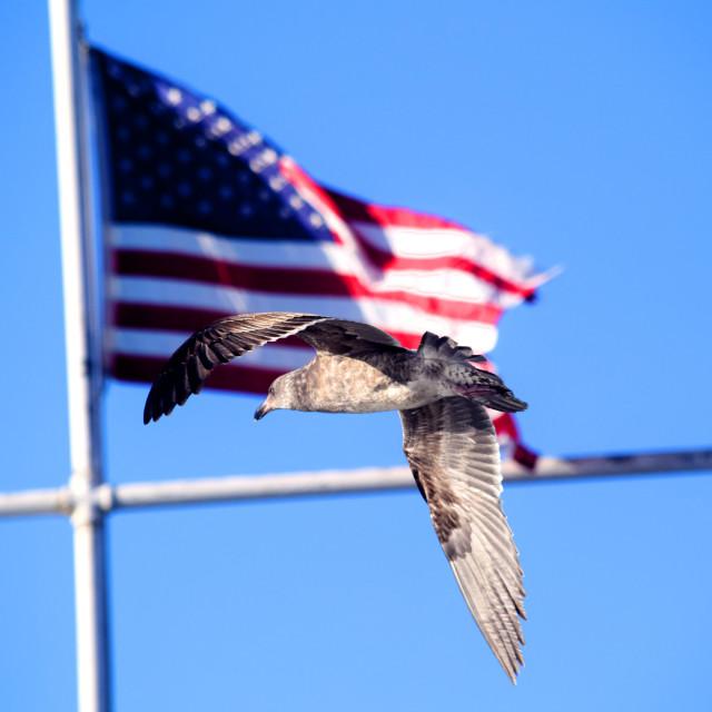 """Freedom"" stock image"