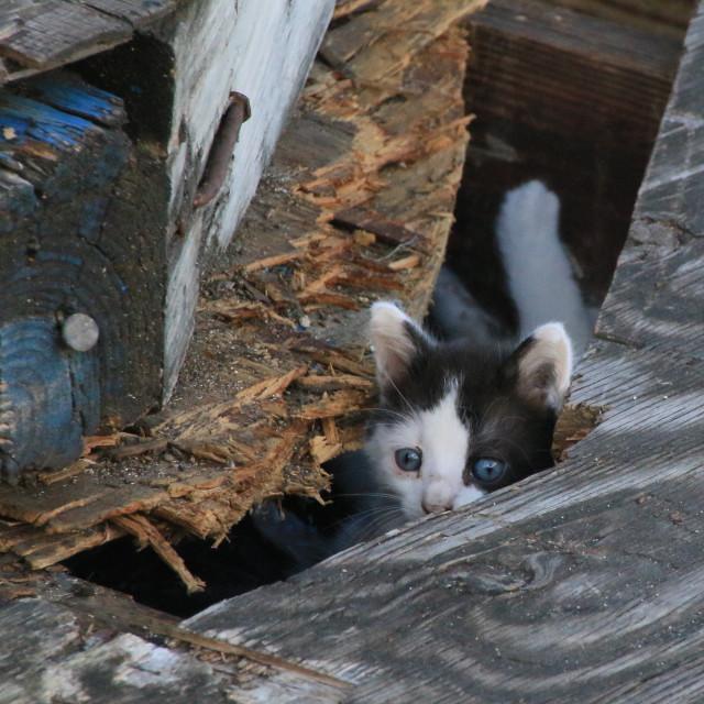 """Peeping Tom"" stock image"