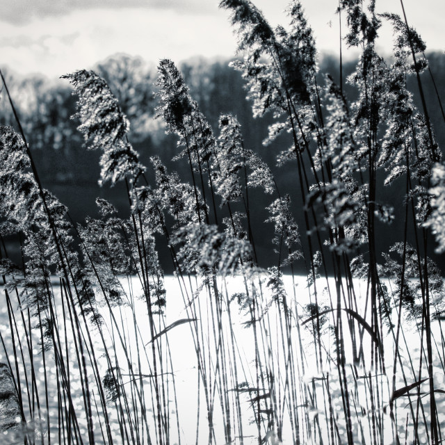 """Crispy Ferns"" stock image"