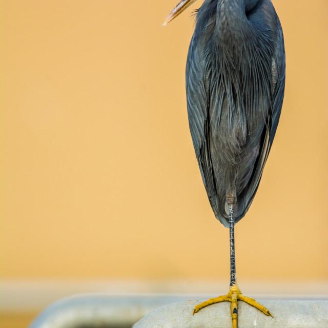"""""""Bird pose"""" stock image"""