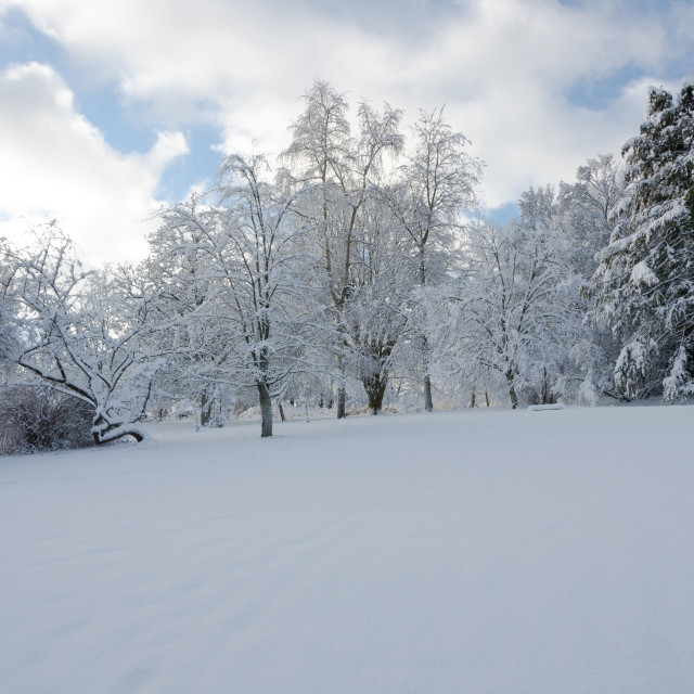 """""""winter in sweden with a lot of snow"""" stock image"""