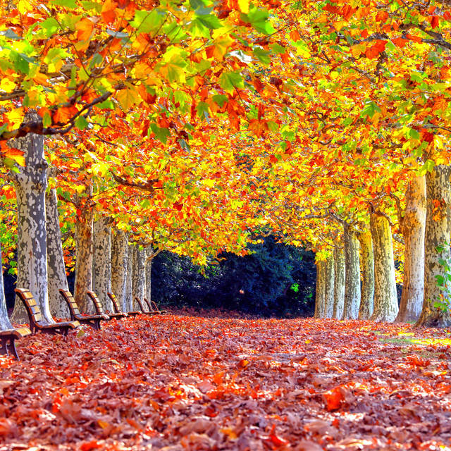 """Welcome Autumn"" stock image"