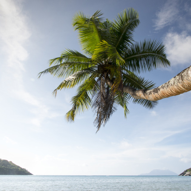"""Tropical island with palm"" stock image"