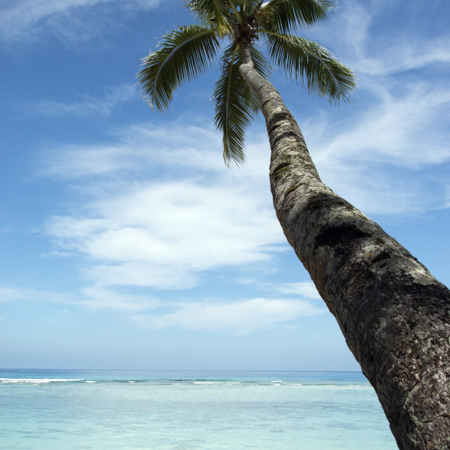 """""""Tropical beach with palm"""" stock image"""