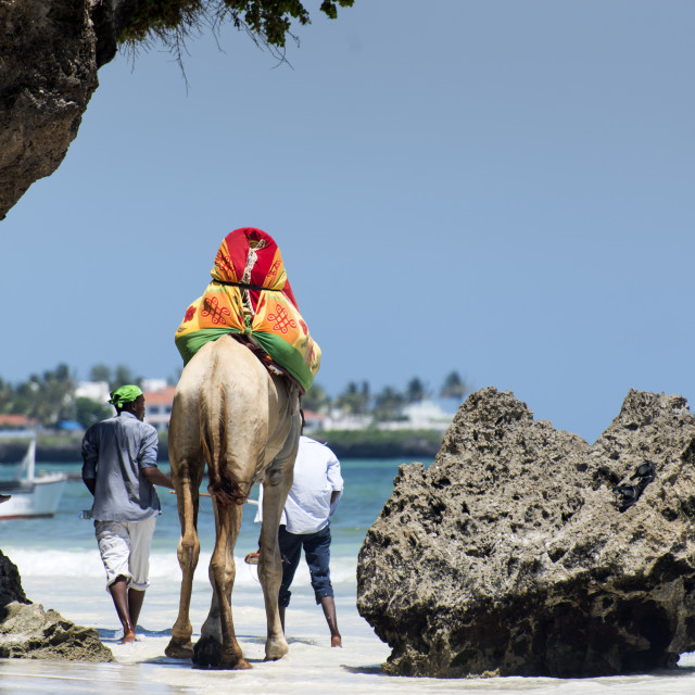 """Camel on the beach"" stock image"