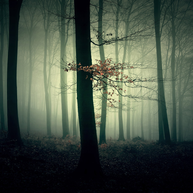 """Dark forest"" stock image"