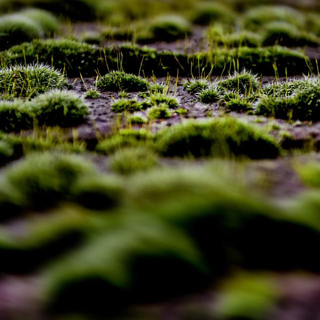 """""""A little bit of moss"""" stock image"""