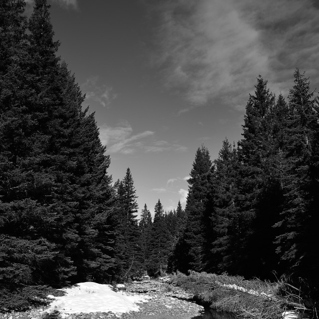 """""""The black and white river bed."""" stock image"""