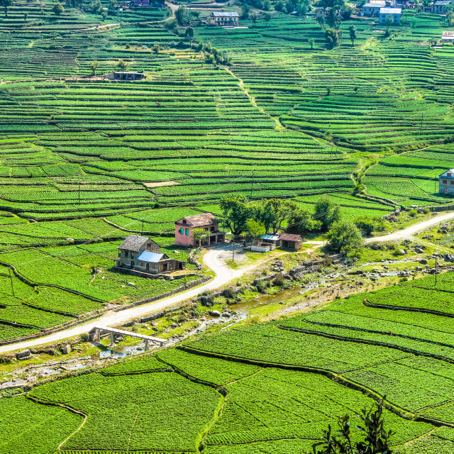 """Nepalese Farmland and Village"" stock image"