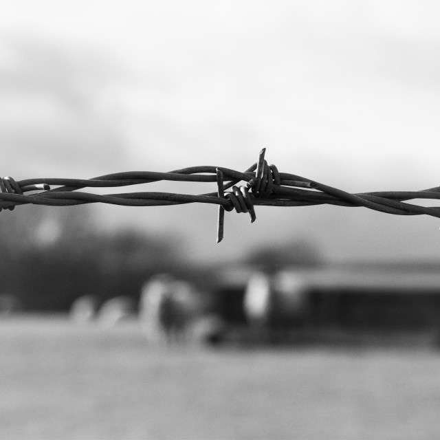 """Barbed Wire"" stock image"