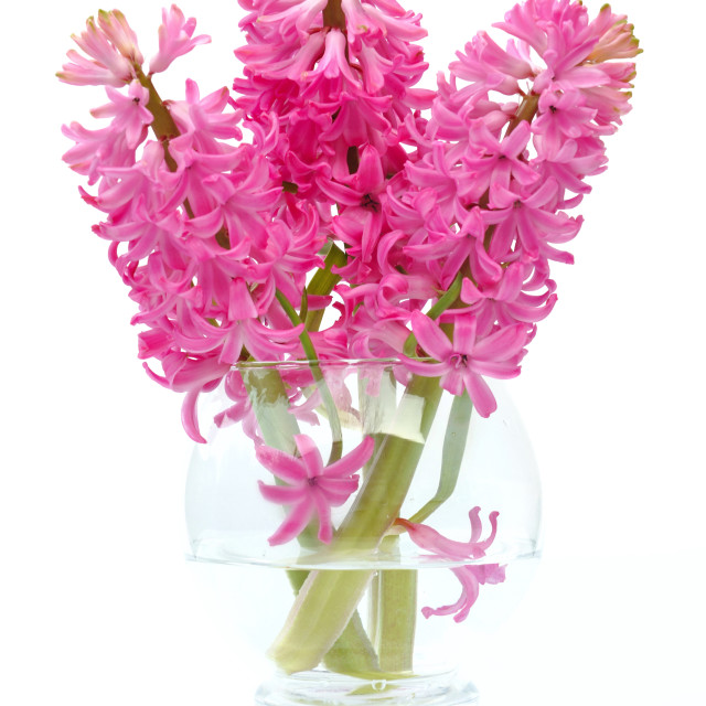 """bouquet of hyacinths"" stock image"