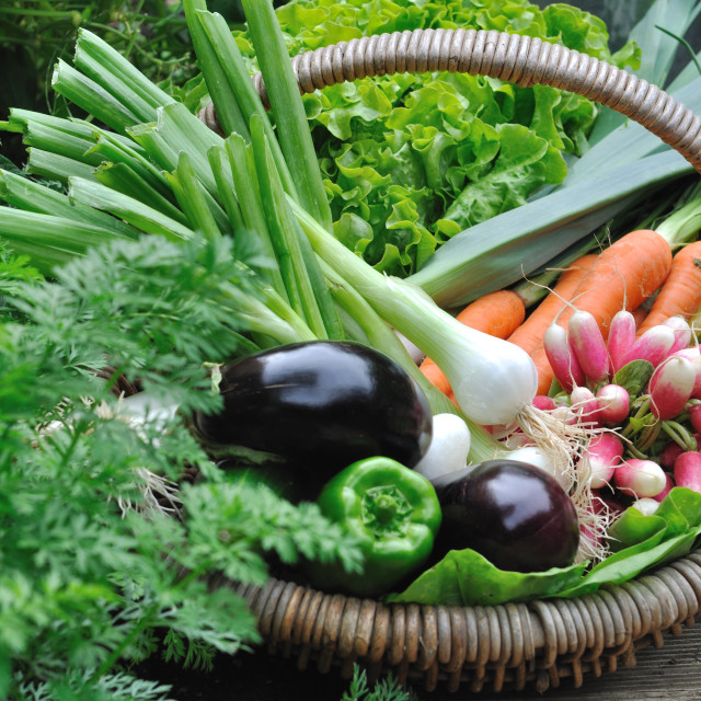 """vegetable basket"" stock image"