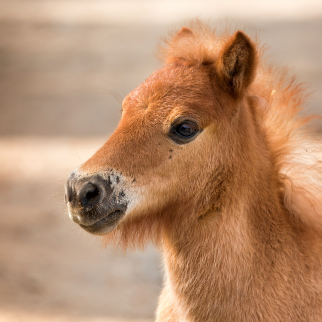 """""""Nag horse"""" stock image"""