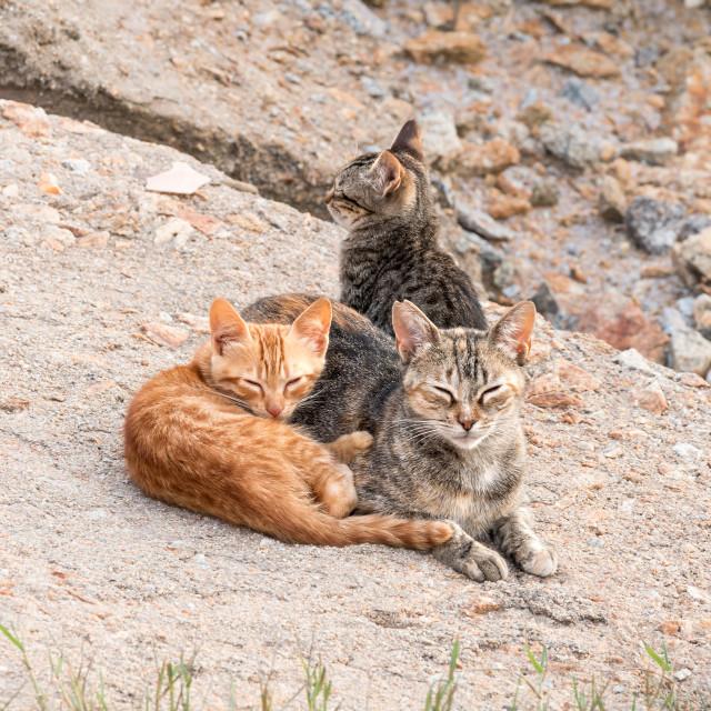 """Cat family"" stock image"
