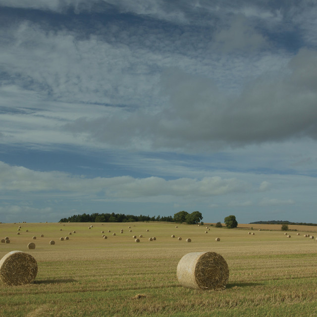 """Hay bales near Smailholm"" stock image"