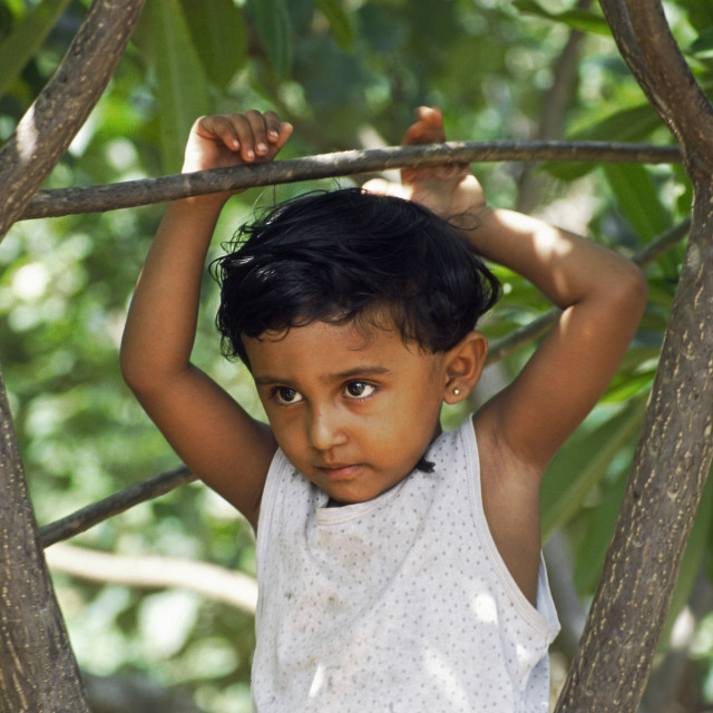 """Boy in tree"" stock image"