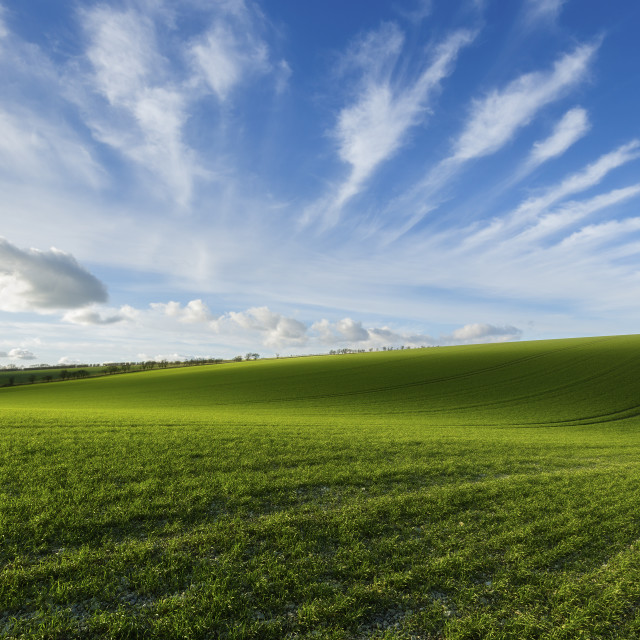 """Rolling Hills"" stock image"