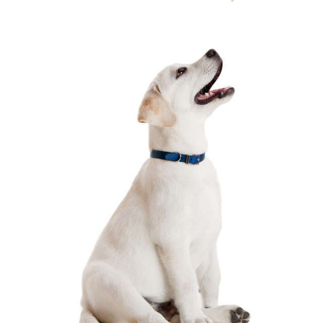 """Good Dog"" stock image"