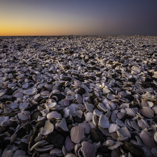"""Dawn in a shell beach in Patagonia"" stock image"