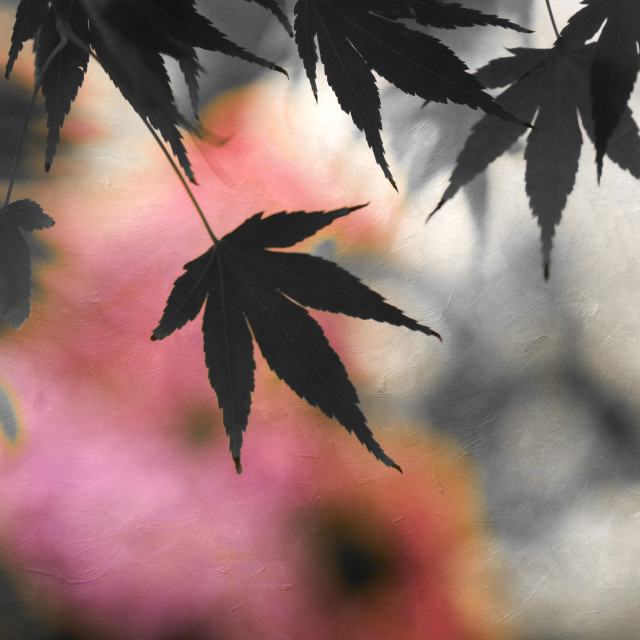 """""""Maple Leaves"""" stock image"""